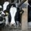 Farmers forced to dump dairy team up with local food bank